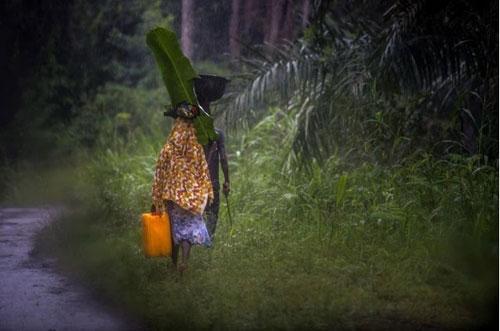 khong tin bac sy, bo om con nhiem ebola tron vao rung - 4