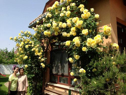 Mảnh vườn Việt đáng ngưỡng mộ trên đất Hungary - 11
