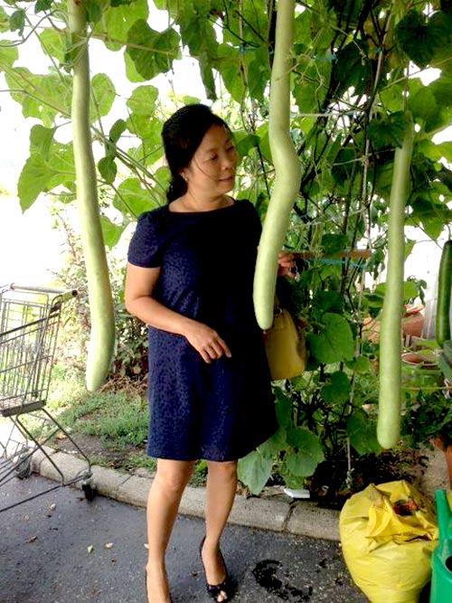 Mảnh vườn Việt đáng ngưỡng mộ trên đất Hungary - 2