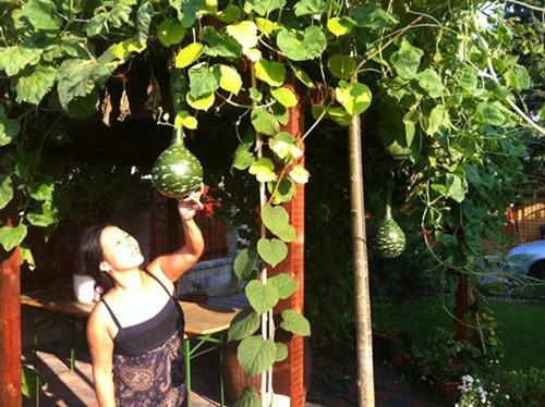 Mảnh vườn Việt đáng ngưỡng mộ trên đất Hungary - 3