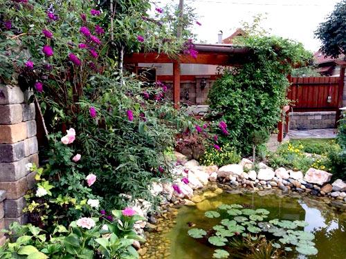 Mảnh vườn Việt đáng ngưỡng mộ trên đất Hungary - 4