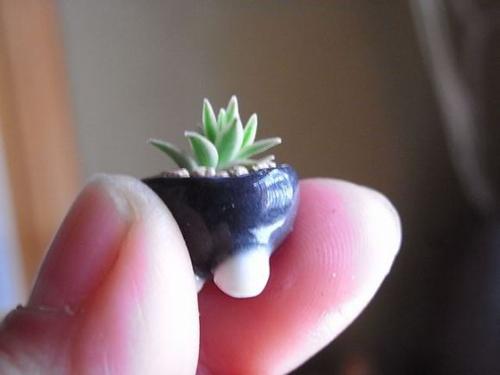bonsai sieu nho 3cm de thuong cho ban tra - 2