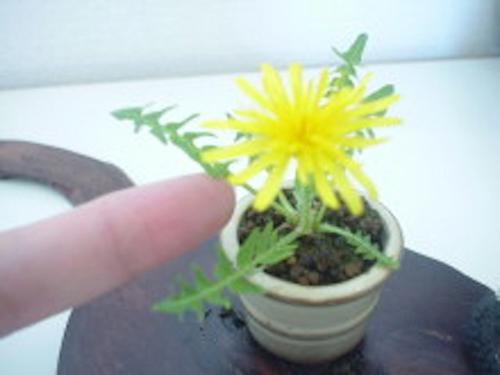 bonsai sieu nho 3cm de thuong cho ban tra - 6