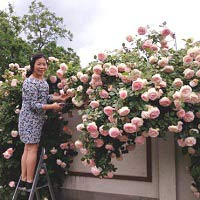 bonsai sieu nho 3cm de thuong cho ban tra - 14
