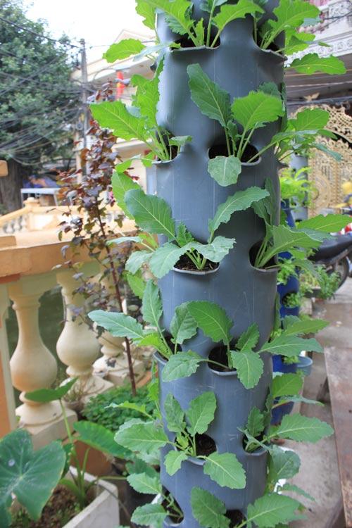 hoa si tu do huong dan trong cay tai gia trong ong nuoc - 13