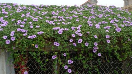 2014 - chi em me dam nhung vuon hoa ruc sac - 12