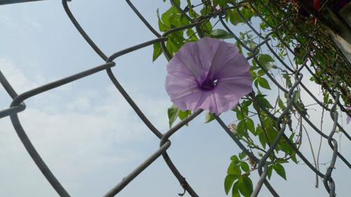 2014 - chi em me dam nhung vuon hoa ruc sac - 13