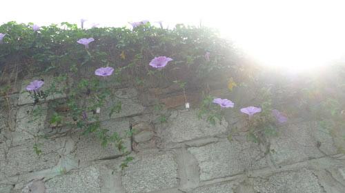 2014 - chi em me dam nhung vuon hoa ruc sac - 15