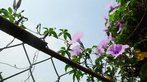 2014 - chi em me dam nhung vuon hoa ruc sac - 14