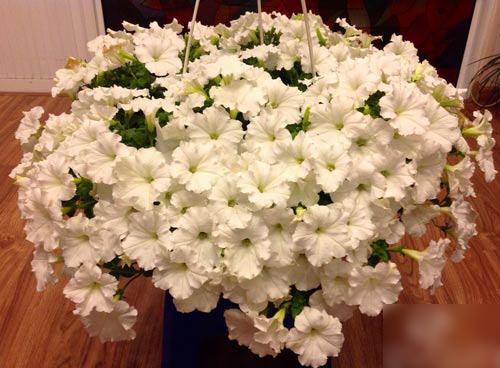 2014 - chi em me dam nhung vuon hoa ruc sac - 6