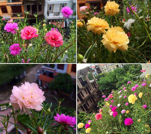 2014 - chi em me dam nhung vuon hoa ruc sac - 8