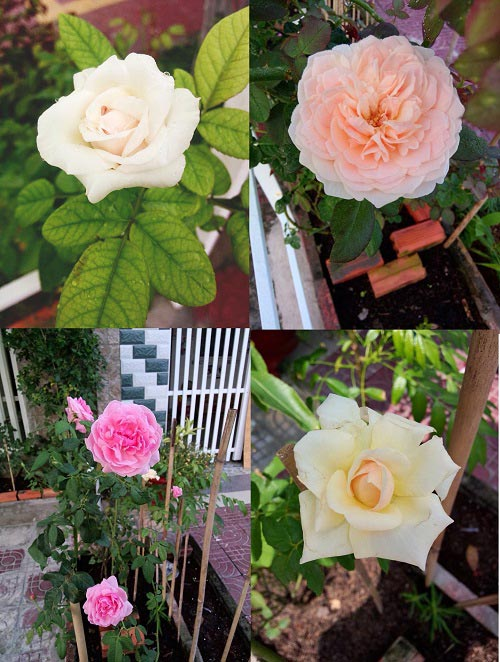 2014 - chi em me dam nhung vuon hoa ruc sac - 17