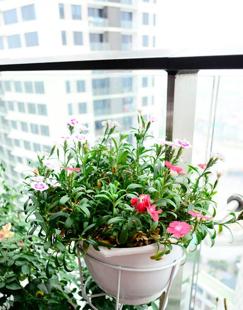 2014 - chi em me dam nhung vuon hoa ruc sac - 2