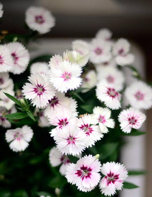 2014 - chi em me dam nhung vuon hoa ruc sac - 3