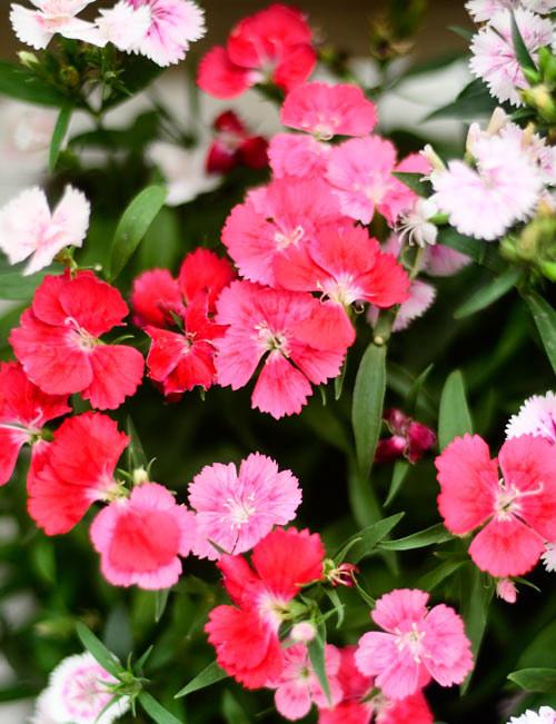2014 - chi em me dam nhung vuon hoa ruc sac - 4