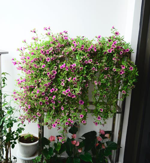 2014 - chi em me dam nhung vuon hoa ruc sac - 1