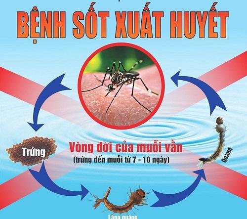 Dịch sốt xuất huyết tăng 350% tại Campuchia-1