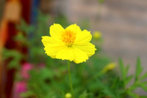trong hoa canh buom rap ron tham troi thu - 7