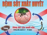 Y tế - Dịch sốt xuất huyết tăng 350% tại Campuchia