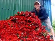 Mua sắm - Giá cả - Hoa hồng Đà Lạt tăng giá gấp 2-3 lần ngày cận lễ