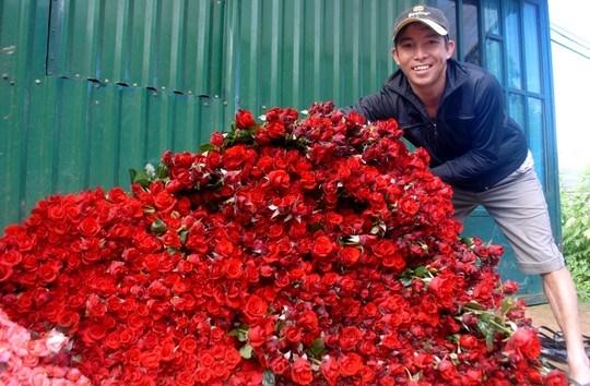 gia hoa hong tang vot - 1