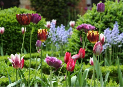 7 mẹo bày vườn nhà đơn giản mà đẹp như Tây-2