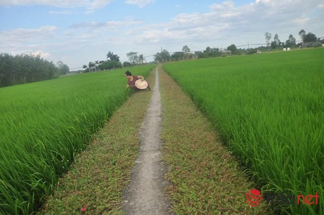 me man con duong hoa muoi gio tho mong cua hai vo chong lao nong - 10