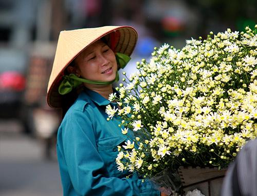 ha noi dep tinh khoi mua hoa cuc hoa mi - 12
