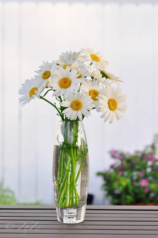 hoc cach cam hoa cuc hoa mi don gian ma dep - 6