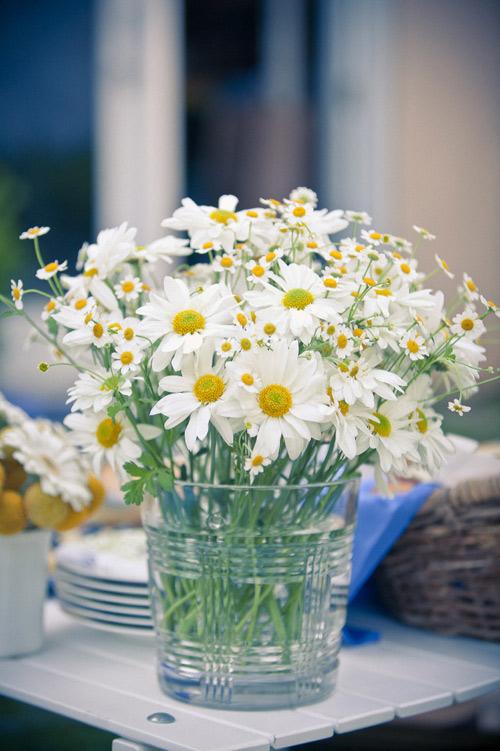 hoc cach cam hoa cuc hoa mi don gian ma dep - 2