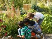 Nhà đẹp - 7 cây cảnh tuyệt đối không trồng trong nhà có trẻ nhỏ, vật nuôi