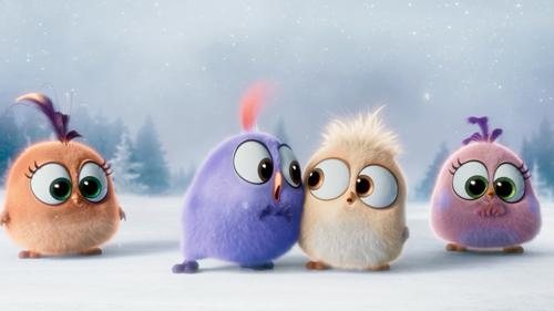 """""""tieu doan"""" chim non angry bird hat mung giang sinh cuc yeu - 4"""