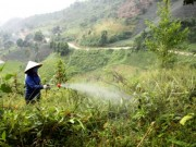 Tin tức - Tận mục quy trình sang chiết thuốc cỏ cháy 'đầu độc' người dùng