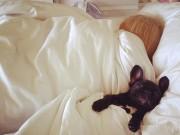 Eva tám - Ngủ với thú cưng giúp bạn khỏe mạnh hơn