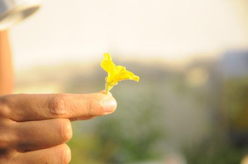 bac si ung buou chia se cach trong rau sach tai nha (phan 2) - 3