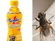 Pháp luật - Một con ruồi khiến Tân Hiệp Phát mất hơn 2.000 tỉ đồng