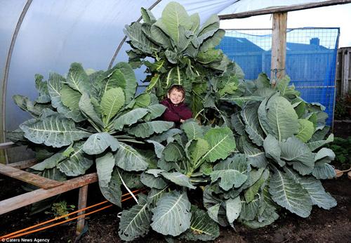 Choáng váng cụ ông 67 tuổi trồng rau củ quả to hơn cả cháu - 2