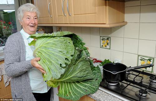 Choáng váng cụ ông 67 tuổi trồng rau củ quả to hơn cả cháu - 5