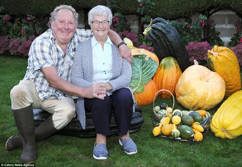 Choáng váng cụ ông 67 tuổi trồng rau củ quả to hơn cả cháu - 6
