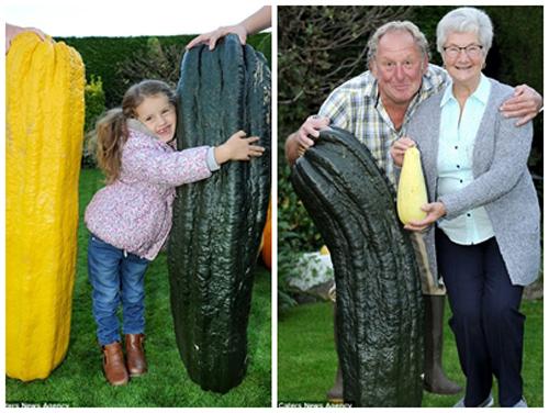 Choáng váng cụ ông 67 tuổi trồng rau củ quả to hơn cả cháu - 1