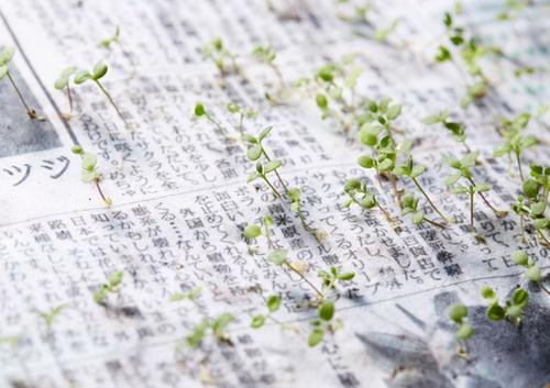Điều kỳ diệu chỉ người Nhật mới làm được: Báo giấy có thể mọc thành cây-1