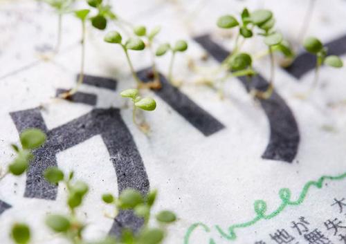 Điều kỳ diệu chỉ người Nhật mới làm được: Báo giấy có thể mọc thành cây-3