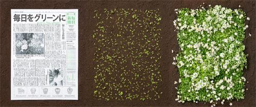 Điều kỳ diệu chỉ người Nhật mới làm được: Báo giấy có thể mọc thành cây-2