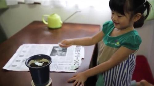 Điều kỳ diệu chỉ người Nhật mới làm được: Báo giấy có thể mọc thành cây-6