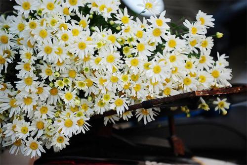bi quyet nhuom mau cho hoa cuc trang cuc nhanh - 1