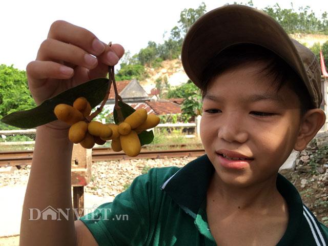"""nhung loai qua dai nui rung """"hut hon"""" lu tre vung que - 9"""
