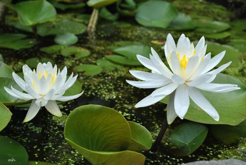 truyen co tich: su tich hoa sung - 1