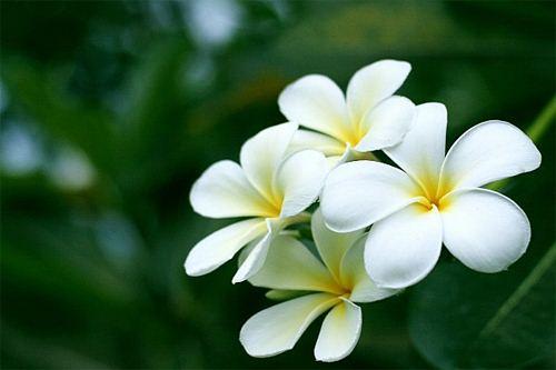 truyen co tich: su tich hoa dai - 1