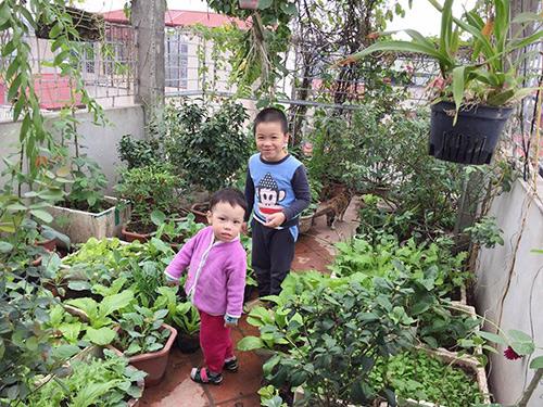 Ông bố 2 con biến sân thượng thành vườn rau, vườn hoa ngợp mắt-1