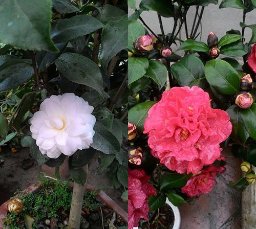 ong bo 2 con bien san thuong thanh vuon rau, vuon hoa ngop mat - 14